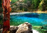 red birch ,Jiuzhaigou7