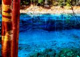 red birch,Jiuzhaigou8