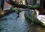 ditch,Lijiang ancient town 991