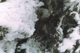 Rime Ice, Mount Islip