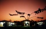 Tindal sunset