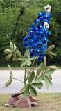 Texas Wildflowers 2005