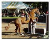 US Equestrian Team Talent Search