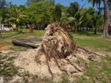 P4235077 Deforestation.jpg
