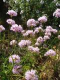 2005 Costa Blanca flora