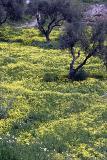 Nerja countryside