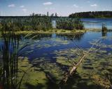 Wetlands. Elk Island National Park, Alberta
