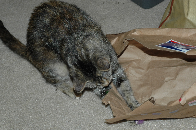 Cat n the bag