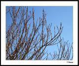 ds20050131_0114awF Shrub in Winter.jpg