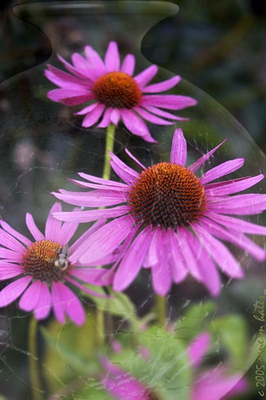 : bottled flowers :
