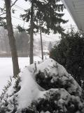 Front yard right