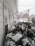 Front yard left