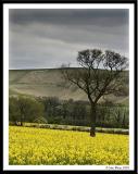 Uffington White Horse Hill