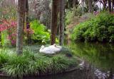 Swans at Bok Tower Gardens, Lake Wales, Florida