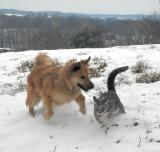 snowplay with curby