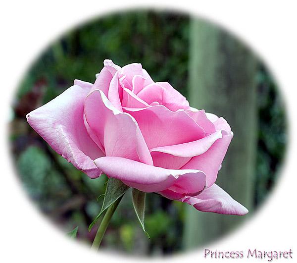 Princess Margaret.