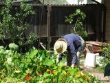 Leslie's Garden - 04/17/05