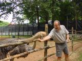 Feeding Emu