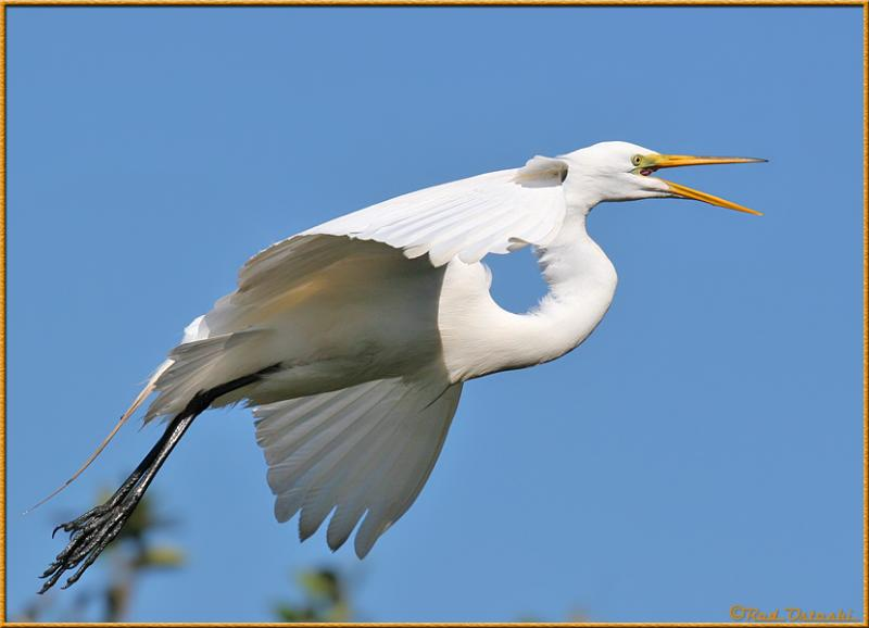 Egret In-Flight