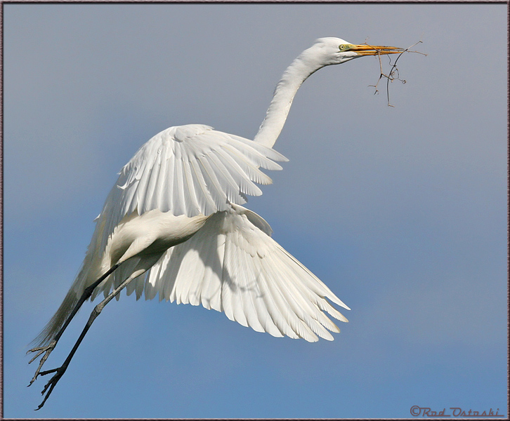Egret In-Flight