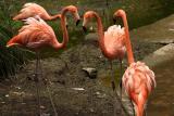 Flamingos_2.jpg