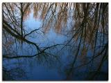 Reflections in the marsh water