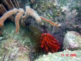 diving_photos
