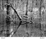 Zone 8 Photographic Society - DRAWN BY LIGHT - Book of Personal Images