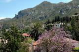 Bellapais view
