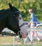 2004 Southwest Washington Fair 4-H Horse Dept. Pictures