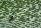 Below Duck Pass