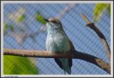 Bird - CRW_0543 copy.jpg