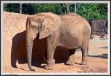 Elephant - CRW_0588 copy.jpg