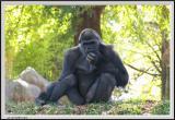 Gorilla - CRW_0537 copy.jpg