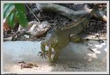 Lizard - CRW_0562 copy.jpg