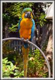 Parrot - CRW_0581 copy.jpg