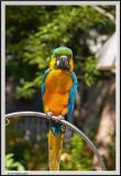 Parrot DOF - CRW_0582 copy.jpg