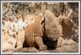 Rhino - CRW_0523 copy.jpg