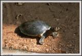 Turtle - CRW_0567 copy.jpg