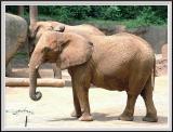 Elephant - DSCF0076 copy.jpg