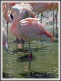 Flamingo Side Fixed - DSCF0070 copy.jpg