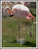 Flamingo one leg Fixed - DSCF0072 copy.jpg