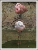 Flamingos - DSCF0073 copy.jpg