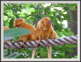 Orange Monkey - DSCF0108 copy.jpg