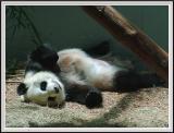 Panda Fixed - DSCF0097 copy.jpg
