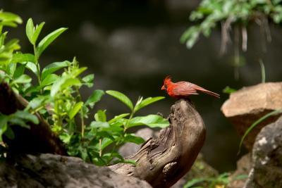 Jungle Birdie