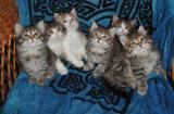 Playful and funny kittens -- Leikkisät ja hauskat pennut