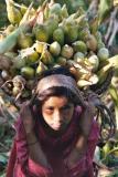 Mosini with Corn, Siruwari Balami Gau