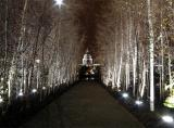 London St. Pauls framed by silver birch trees outside Tate Modern