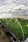 Tropica Aquarium Plant's Denmark